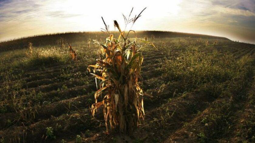 Greenpeace considera que la única solución a la seguridad alimentaria son los cultivos ecológicos.