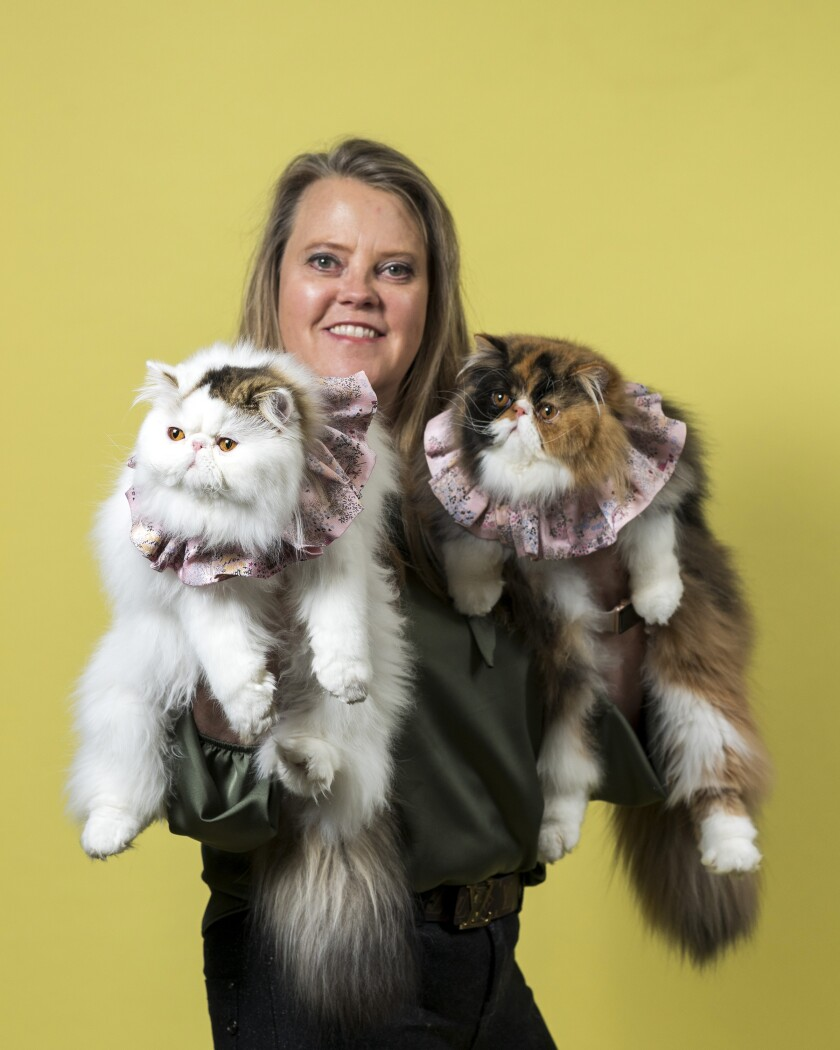 Anne-Charlotte Joseph holds her Persian cats Lunabelle, left, and Babybel, both wearing ruffled collars.