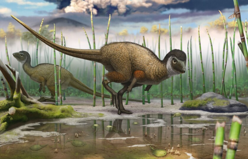 The discovery of a fossil of the feathered dinosaur Kulindadromeus zabaikalicus in Siberia suggests more dinosaurs had feathers than previously thought.