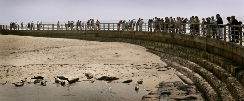 Visitors to the Children's Pool in La Jolla viewed the seals from the sea wall that created the cove. (Howard Lipin / Union-Tribune)