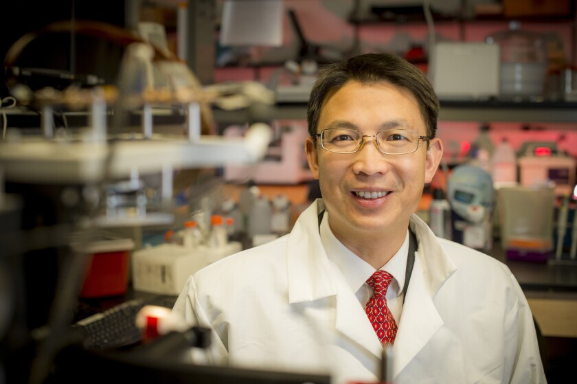A nanoengineering professor at the UC San Diego Jacobs School of Engineering, Shaochen Chen is developing 3-D printing methods that will one day manufacture new organs for implantation.