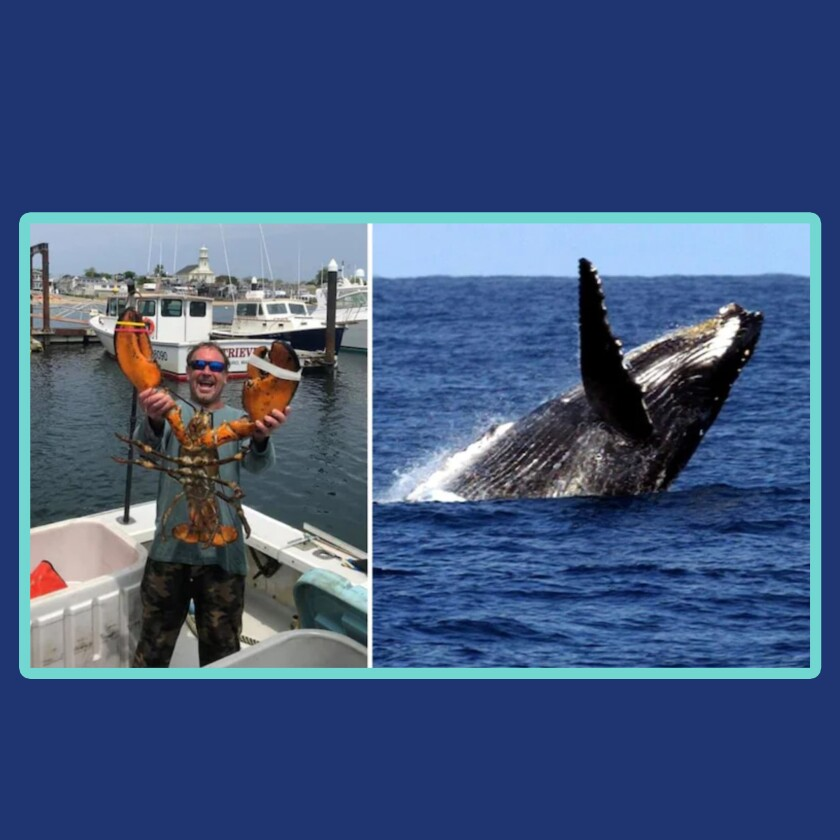 Photos of Michael Packard, left, and a humpback well mid-dive.