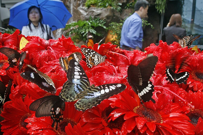 The butterfly garden at Singapore's Changi Airport.