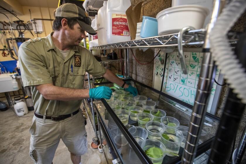 461866_endangered_frog_breeding_10_BRV.jpg