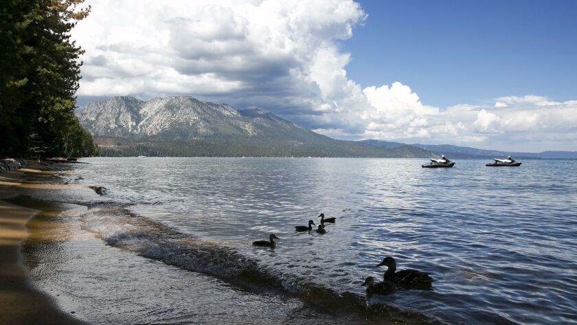 In a 2017 photo, a family of ducks swims along the shore of South Lake Tahoe.