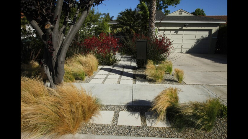 Tall kangaroo paws act as a screen and provide privacy from the street in what was formerly a lawn. Landscape designer Naomi Sanders created flow between the driveway and house by installing pavers and gravel, which offer a path to a central seating area.