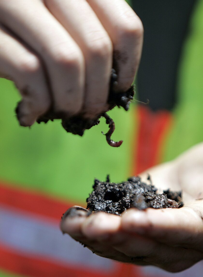 Machines aren't the only mechanism for making compost. Worms digest green waste in vermi-composting.