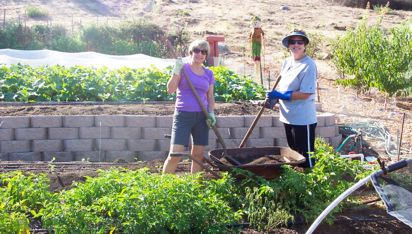 Teresa Chartz and Linda Bouchard are two of the community volunteers who tend the Backyard Produce Garden and pick residential fruit trees as part of the Backyard Produce Project.