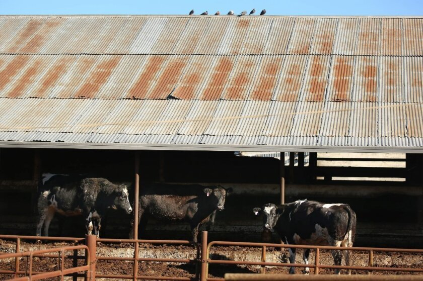 The USDA's Food Safety and Inspection service suspended operations at the Rancho Feeding slaughterhouse in January, sparking a recall that would include nearly 10 million pounds of beef sold to thousands of stores.