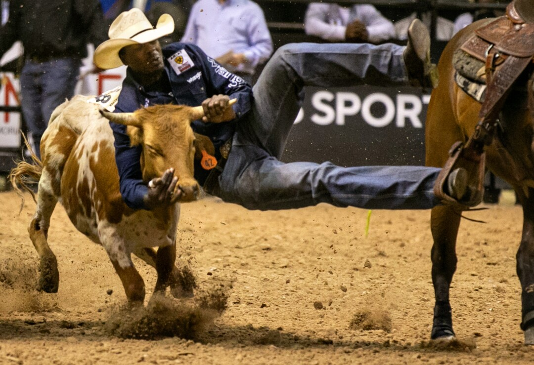 A cowboy takes a calf by the horns during the bulldogging competition