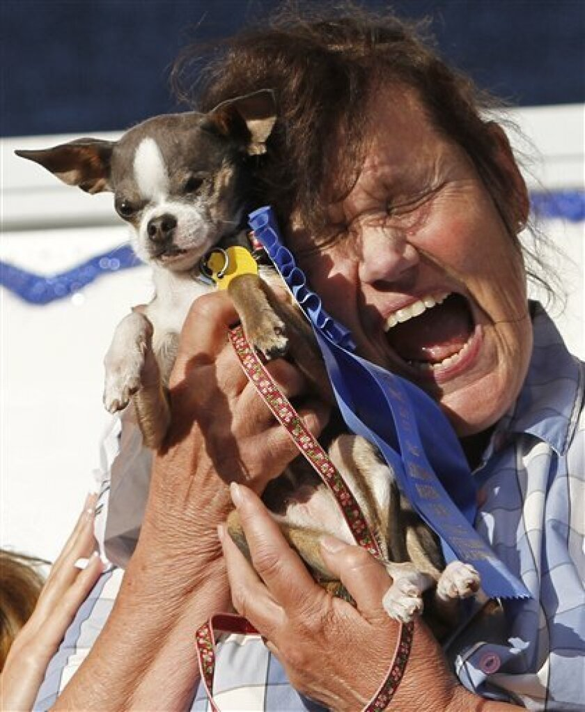 """This photo taken June 25, 2010 shows Kathleen Francis, of Clearlake, Calif., clutching her purebred Chihuahua """"Princess Abby"""" after winning the World's Ugliest Dog Contest in Petaluma, Calif. With a pile of personality and some unusual dance moves, the 6-pound Chihuahua easily won the title of world's ugliest dog at the Sonoma-Marin Fair in Petaluma. (AP Photo/Ben Margot)"""