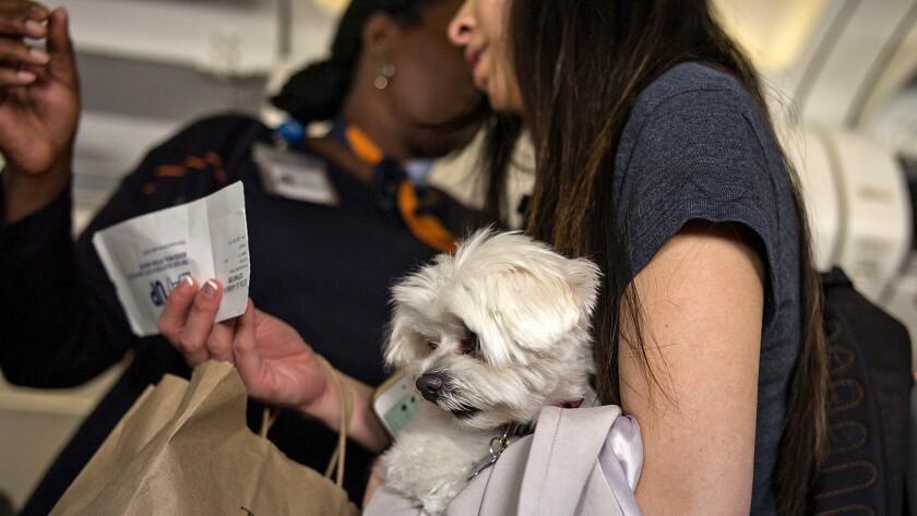Pets On Board A JetBlue Flght