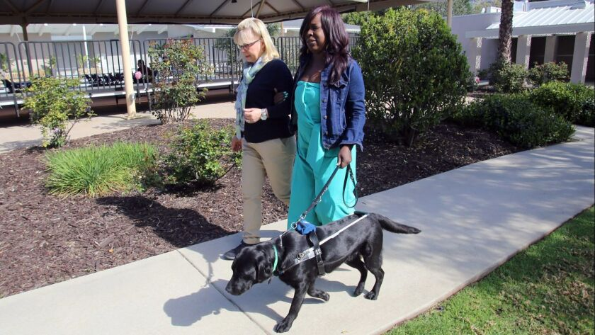 Alison Schooley, of Burbank walks with Toni Carr, of Chicago, and Cassidy to the Guide Dogs of Ameri