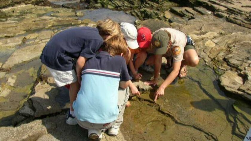 Children explore the tide pools at Crystal Cove State Park.