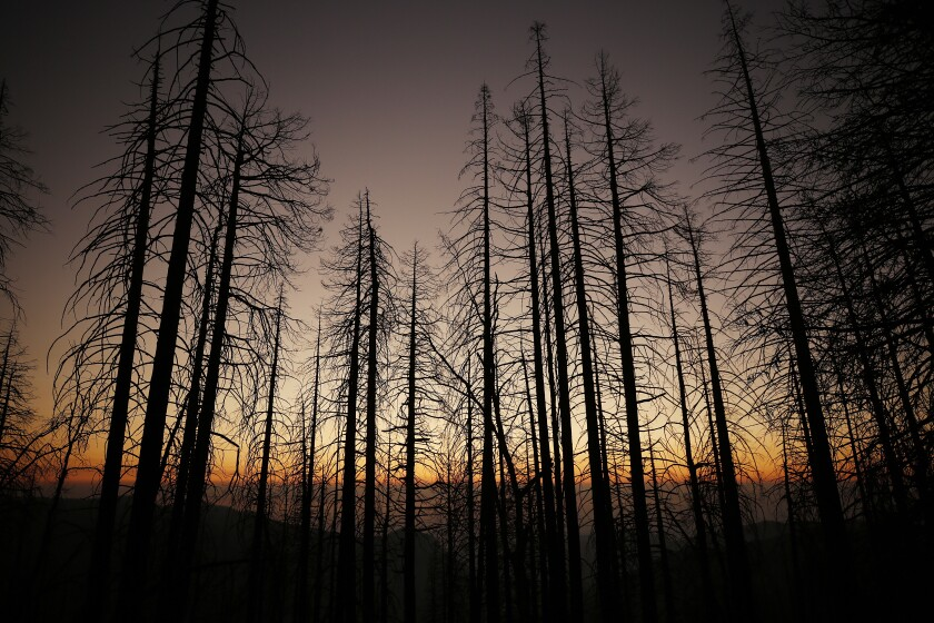 Trees in front of a sunset obscured by smoke-filled skies