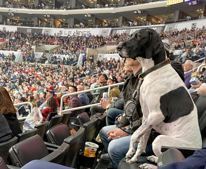 A four-legged fan watches as the Kings play the Calgary Flames at Staples Center on Wednesday night.
