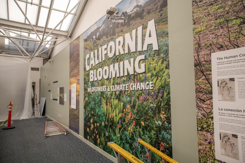 The San Diego Natural History Museum will unveil anew wildflower photo exhibition when it reopens.