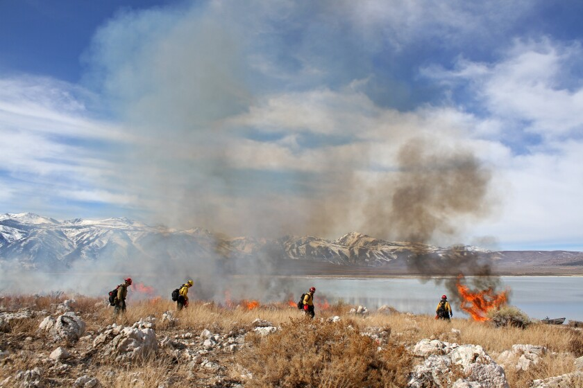 Controlled burn at Mono Lake, Calif.