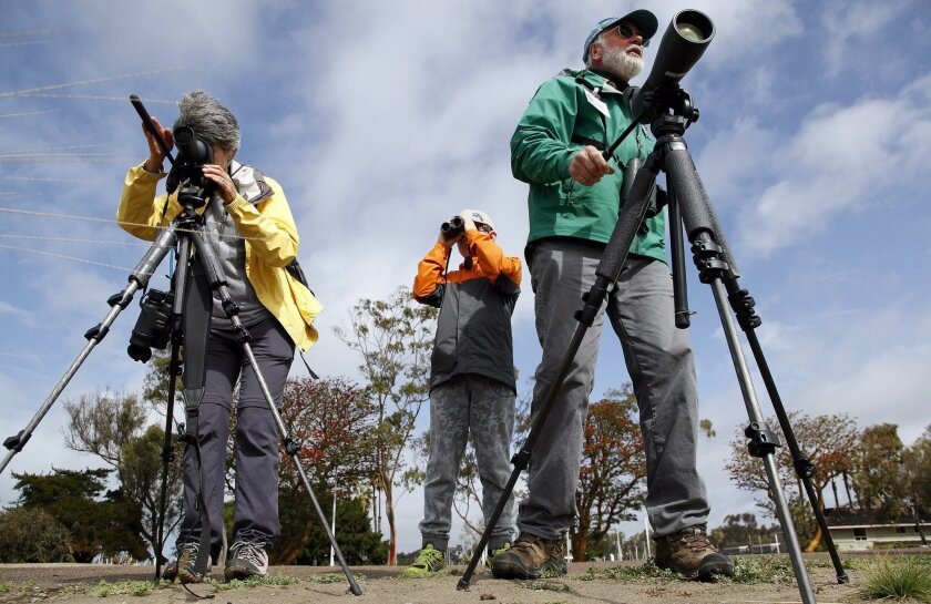 The 2016 San Diego Bird Festival took place at the Marina Village Conference Center in Mission Bay. Lisa Ruby, left, Drew Koch, 8, and Peter Thomas used spotting scopes and binoculars to check on birds in the San Diego River opposite the conference.