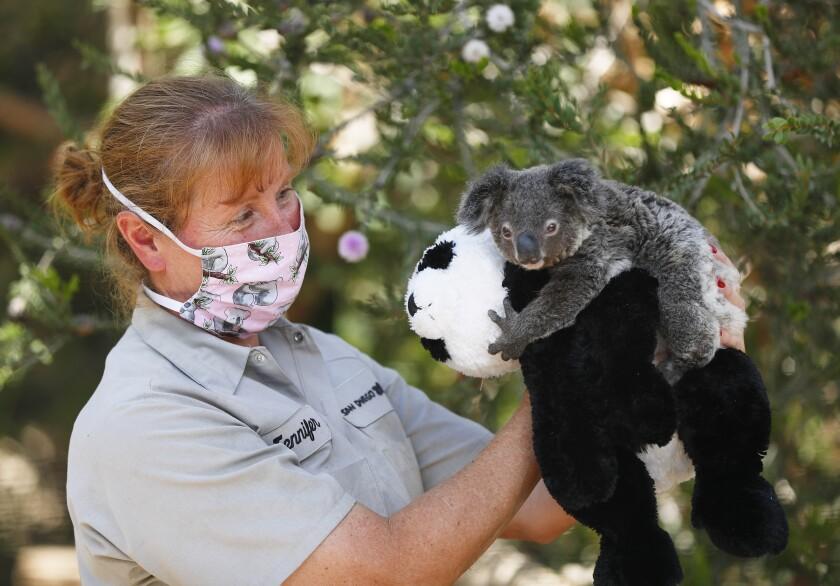 Jennifer Roesler wildlife care specialist holds Omeo, a koala joey