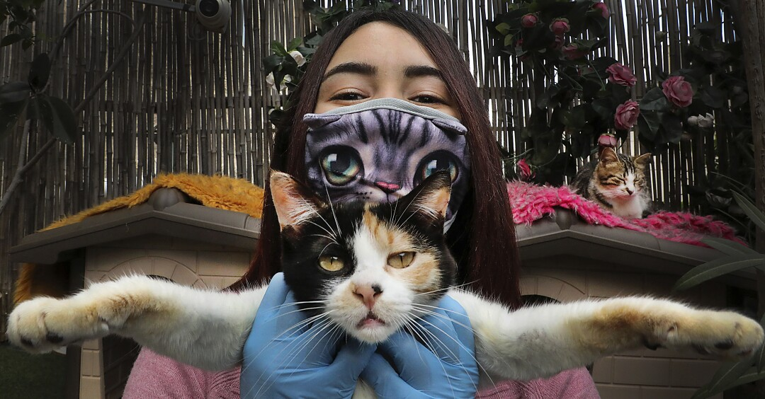 WEST BANK: Hiba Junaidi, wearing protective gloves and a mask amid the coronavirus outbreak, poses with one of the stray cats she cares for in her house's backyard, which she had turned into a shelter, near the West Bank city of Hebron, on April 7.