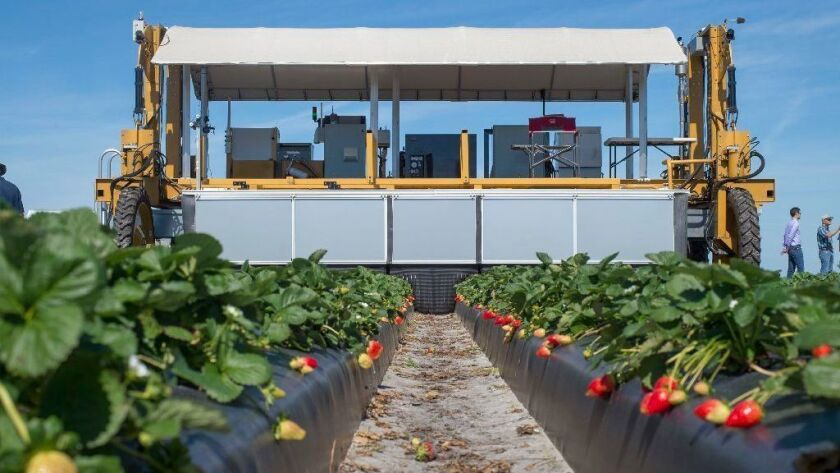 The Berry-4 automated strawberry harvesting robot, also known as Harv, is demonstrated Feb. 6, 2019, at G & D Farms in Duette, Fla. Designing a robot with a gentle touch is among the biggest technical obstacles to automating the American farm.