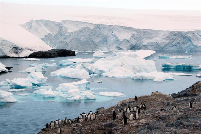 """La científica mexicana Sandra Guzmán hizo hoy un llamado urgente a combatir los efectos del cambio climático tras denunciar diversas """"situaciones anormales"""" observadas durante una visita de 10 días a la Antártida. EFE/Archivo"""