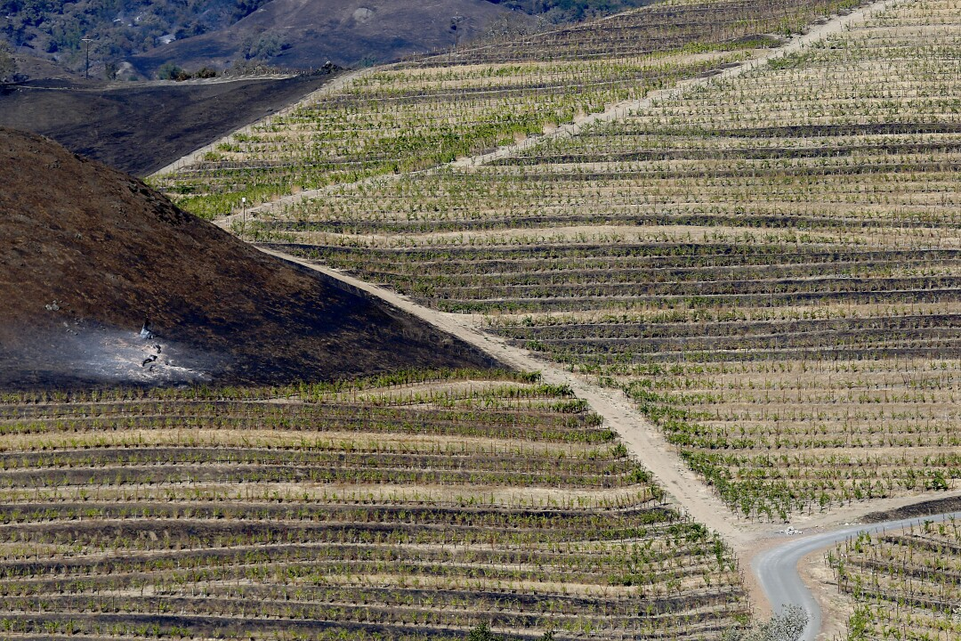 Charred hillsides show the path of the Kincade fire adjacaent to vineyards near Healdsburg.
