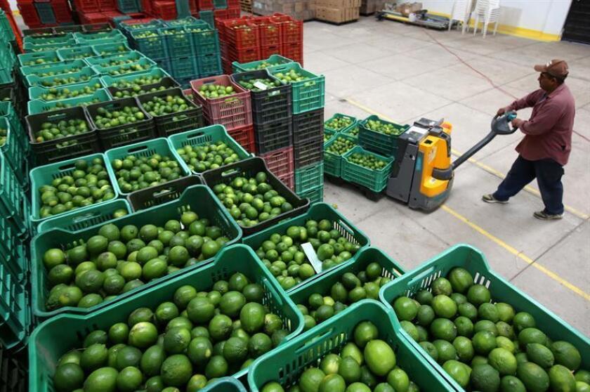 Empleados de la cosecha del limón trabajan en la recolecta del cítrico en la población de San Martín Hidalgo, en el estado de Jalisco (México). El consumo privado y la consolidación de las exportaciones impulsarán la economía mexicana en 2018 pese a la incertidumbre asociada a la renegociación del Tratado de Libre Comercio de América del Norte (TLCAN). EFE/Archivo