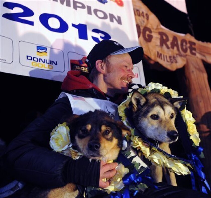 Mitch Seavey holds his lead dogs, Tanner, left, and Taurus, as he poses for photographers at the finish line of the Iditarod Trail Sled Dog race in Nome, Alaska, Tuesday, March 12, 2013.  Seavy became the oldest winner and a two-time Iditarod champion.   (AP Photo/The Anchorage Daily News, Bill Rot