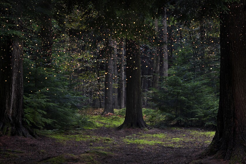 """Ellie Davies merges photographs of forest scenery with NASA images of the stars in compositions including """"Stars 14"""" in her book """"Into the Woods."""""""