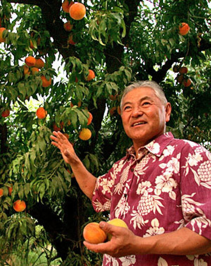 GROWER: Masumoto knows peaches, and worry.