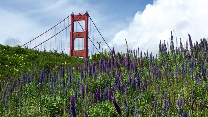 You've seen the Golden Gate Bridge lots of times, but here's ...