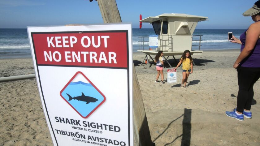 Tishmall Turner snaps a photo Sunday of one of the signs on Beacon's Beach warning people of a shark