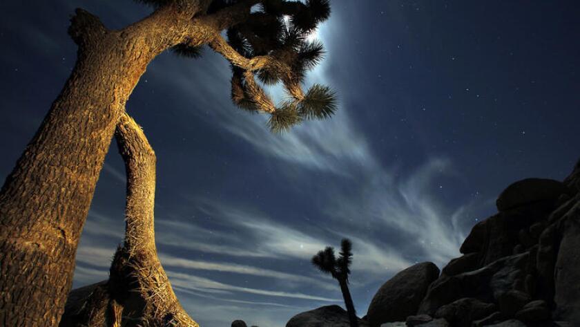 Una luna brillante ilumina el cielo sobre el desierto del Parque Nacional Joshua Tree. Si van de visita este fin de semana se ahorrarán $15 dólares en cuotas de entrada como parte de los festejos de la Semana de los Parques Nacionales.
