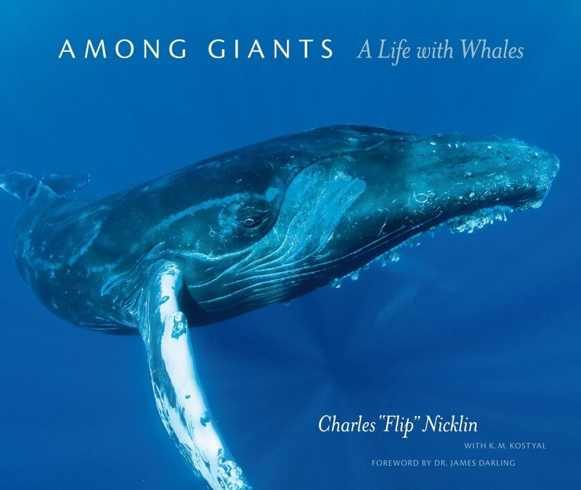 Flip Nicklin's coffee table book not only includes decades of cetacean photos, but also a narrative of his life from a teen in San Diego to world-class photographer.
