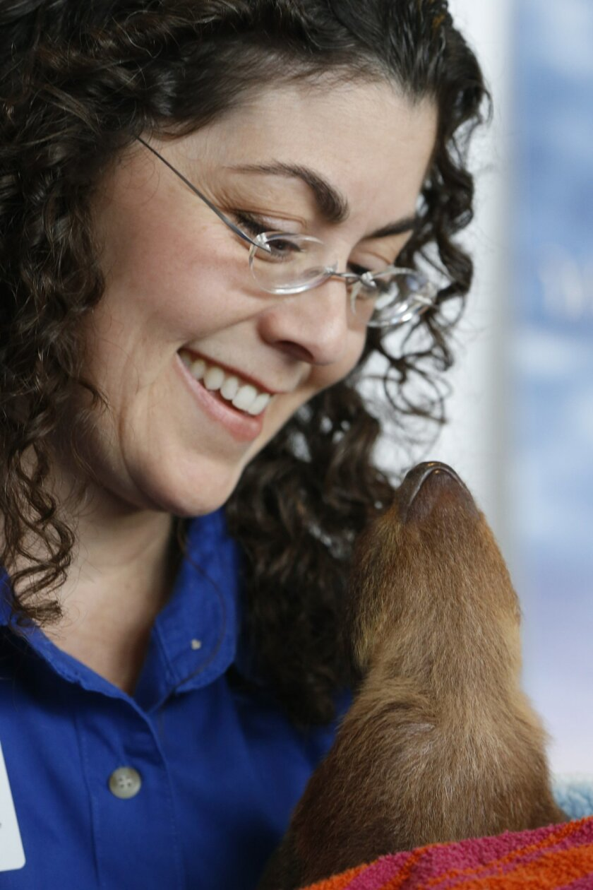 Pilar Fish, the director of Veterinary Medicine for the National Aviary in Pittsburgh, smiles as he looks down at the three-month-old Linnaeus's two-toed sloth the Aviary acquired for education and interactive encounters during a news conference at the Allegheny  County airport after it arrived on