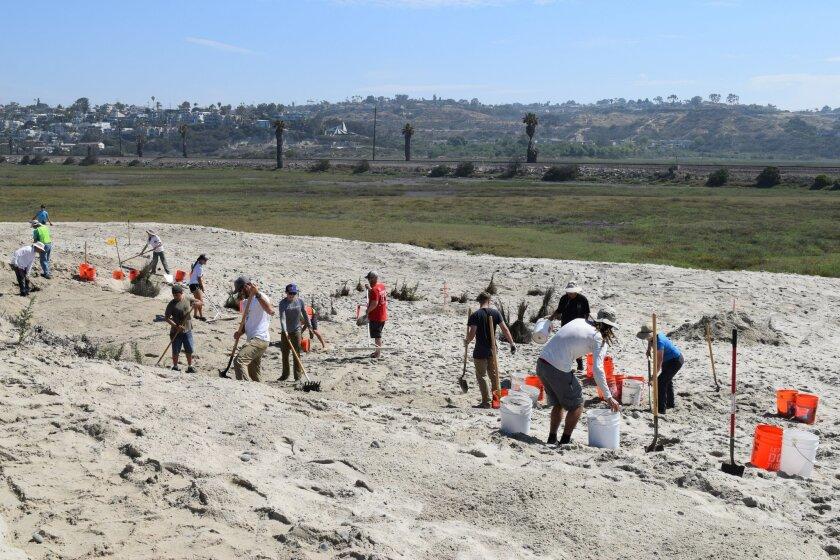Volunteers expand coastal dunes for endangered species at San Elijo Lagoon