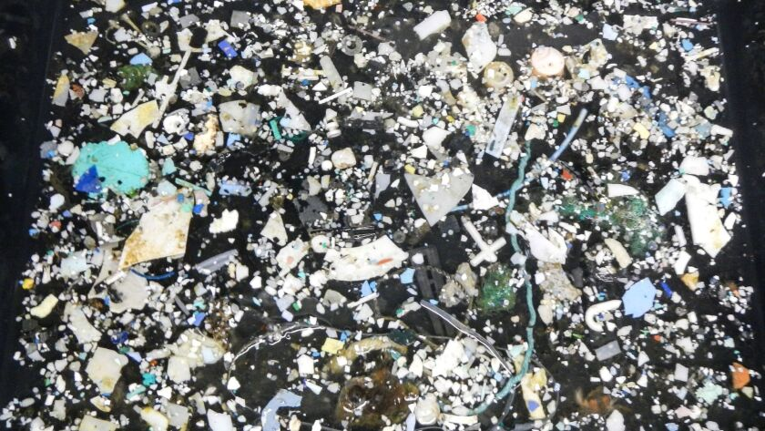 Plastic samples were pulled out of the ocean at the Great Pacific Garbage Patch, located between Hawaii and California,
