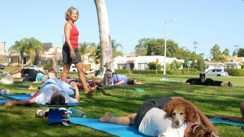 Leash Your Fitness founder and Doga Yoga instructor Dawn Celapino leads dogs and their human practitioners into a supine twist. (Rick Nocon)