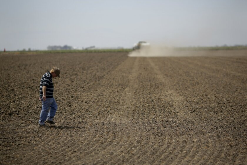 In this May 1, 2014 photo, farmworker Chris Volkman examines the rice field sprayed with liquid fertilizer before getting water in Richvale, Calif. California's drought-ravaged reservoirs are running so low that state water deliveries to some metropolitan areas have all but stopped, and cutbacks ar