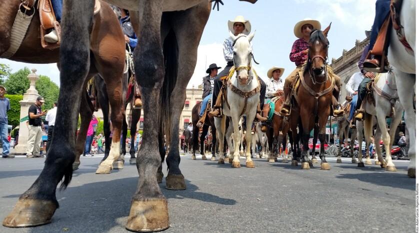 Ciudadanos que defienden las peleas de gallos, la fiesta taurina y otras actividades con animales, se oponen a la iniciativa de ley que pretende prohibir espectáculos que impliquen maltrato animal en Michoacán.