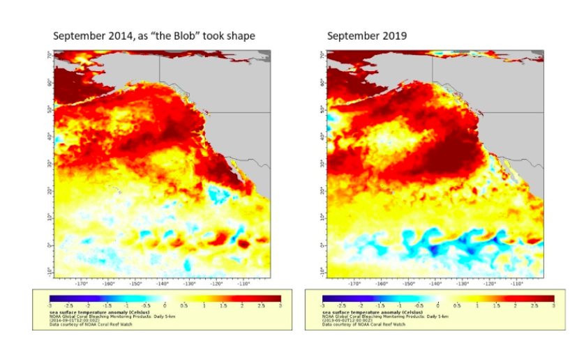 Comparing the 2014 blob and the warm mass of water today.