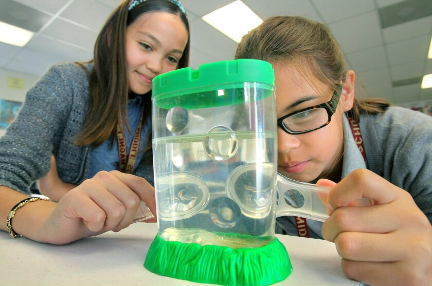 Students from Vista Magnet Middle School are designing an experiment that will be carried to the International Space Station this fall. Here, students look at microscopic brine shrimp that may become the focus of one experiment.