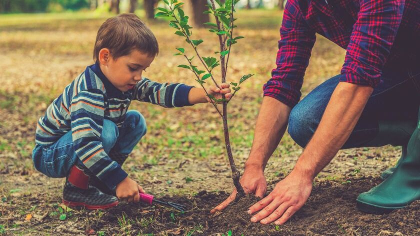 Now's the time to plant a tree, which is the most important tool in fighting global warming.
