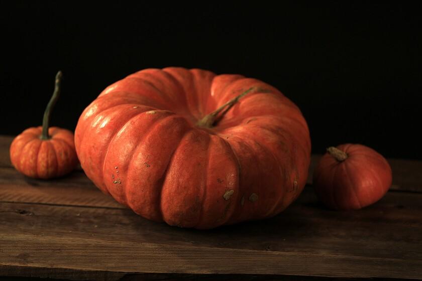Fairytale Pumpkin Squash