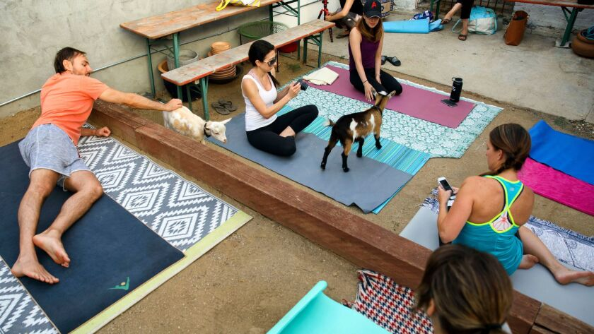 Attendees take pictures before a goat yoga session from Hello Critter.