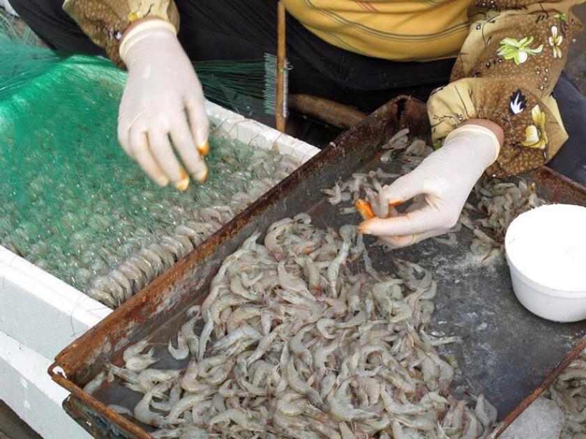 La exportación de camarón hondureño al mercado mexicano fue cerrada desde octubre de 2017. EFE/Archivo