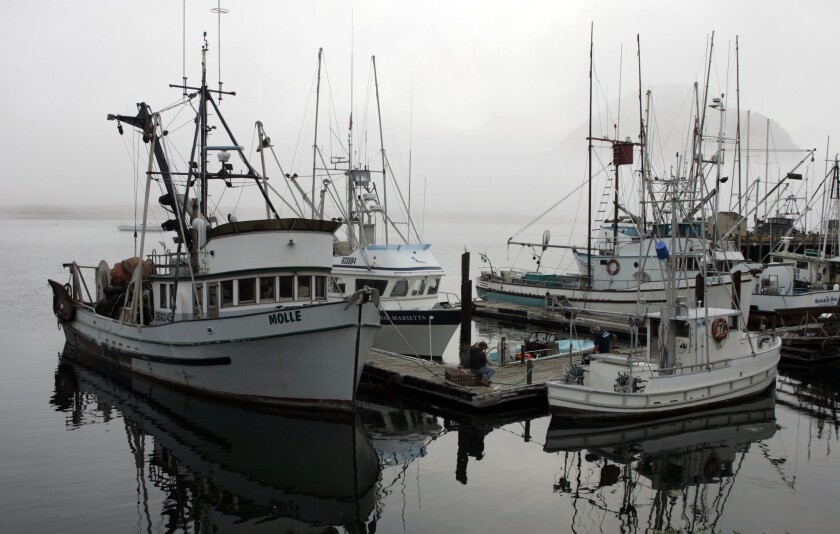 "Fishing trawlers in Morro Bay will have more opportunity to bring in commercial catches. The Marine Stewardship Council on Tuesday designated 13 Pacific species as ""sustainable."""