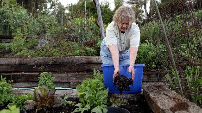 PASADENA, CALIF. -- THURSDAY, MARCH 21, 2019: Yvonne Savio, 71, a master gardener, spreads coffee gr